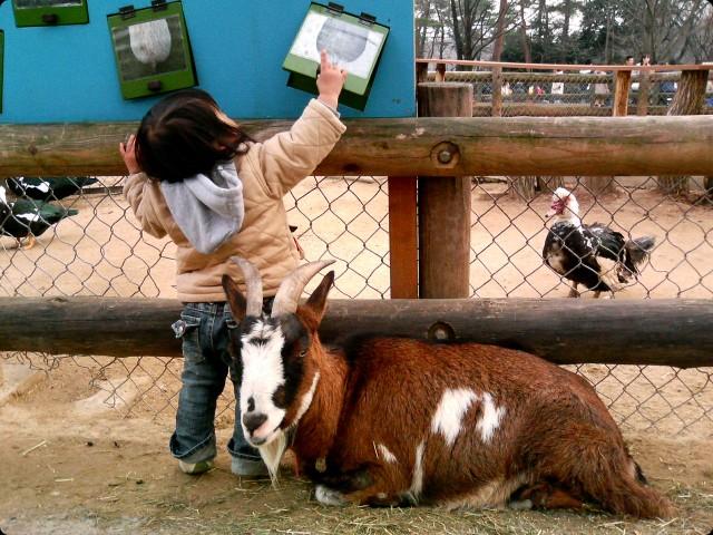 動物園 - ヤギ -