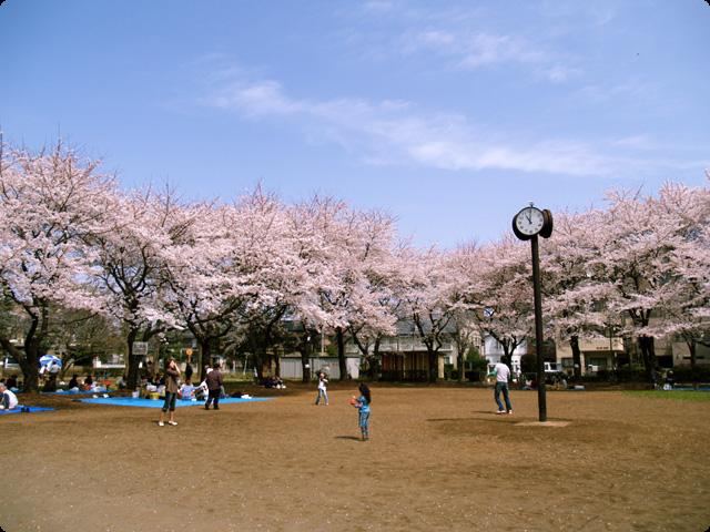 桜 さくら SAKURA Vol.2-3