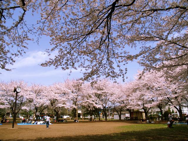 桜 さくら SAKURA Vol.2-4