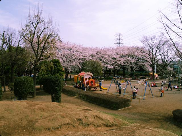 桜 さくら SAKURA Vol.2-5